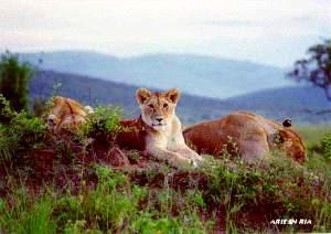 Kenya, Reisverhaal Arie Graus