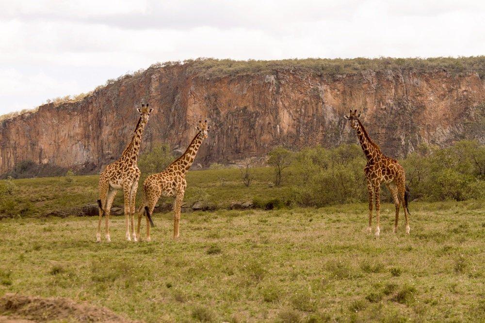 Op safari in Afrika: 5 nationale parken buiten de gebaande paden